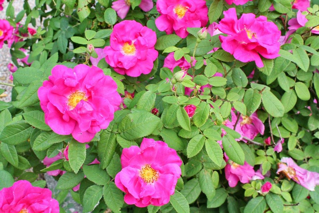 Flowers_IMG_0008