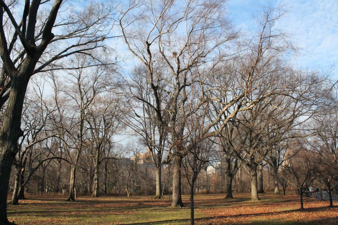 Beautiful Weather for December in Central Park